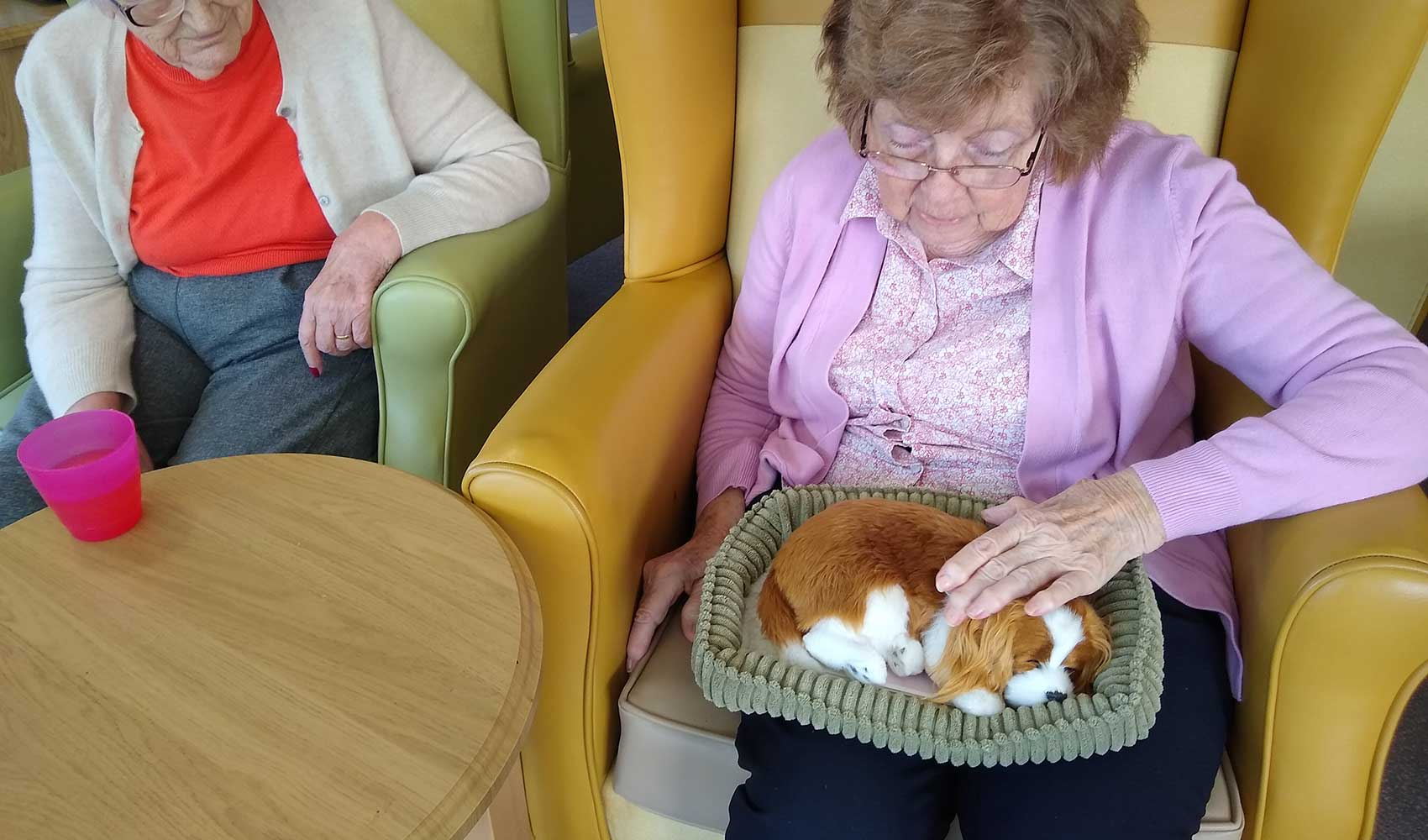 A 'pawfect' afternoon at Fern Brook Lodge